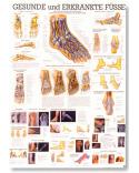 Reflexní zóny nohy a ruky