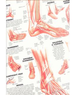 Noha kotník